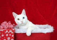 Biały kot osiąga szczyt z Bożenarodzeniowego kosza z heterochromia zdjęcia stock