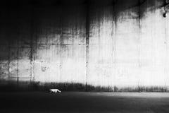 Biały kot przeciw ścianie Fotografia Royalty Free