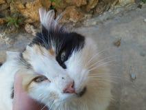 biały kot przyglądający up w wiosce przy latem Zdjęcia Stock