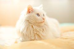 Biały kot, słoneczny dzień Zdjęcie Royalty Free