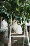 Biały kot siedzi na drabinie pod drzewem i patrzeje up zdjęcie royalty free