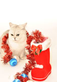 Biały kot z Bożenarodzeniowymi zabawkami Fotografia Royalty Free