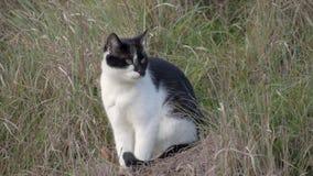 Bia?y kota obsiadanie w suchej trawie Domowy zwierz? domowe zbiory wideo