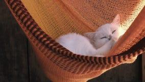 Biały kota odpoczynek wygrzewa się w pomarańczowym hamaku Kotów obmycia zbiory