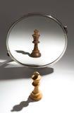 Biały królewiątko jest przyglądający w lustrze ono widzieć jako czarny królewiątko Fotografia Royalty Free