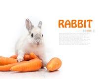 Biały królik i marchewka obraz royalty free