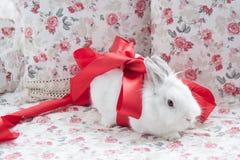 Biały królik w pełen wdzięku czerwonym faborku Zdjęcie Royalty Free