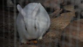 Biały królik w zoo zbiory wideo