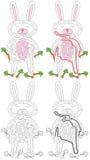 Biały królika labirynt Obrazy Stock