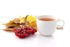 Biały kubek herbata na białym tle z jesień liśćmi Zdjęcie Royalty Free