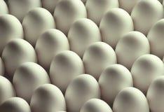 biały kurczaków jajka Zdjęcie Royalty Free