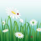 Biały kwiat i biedronki wśród trawy również zwrócić corel ilustracji wektora Zdjęcie Stock
