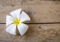 Biały kwiat na drewnianych podłoga Obraz Royalty Free