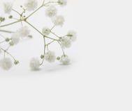 Biały kwiat na lekkim tle retro stylowy rocznik obrazy royalty free