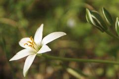 Biały kwiat przy słońcem zdjęcia royalty free