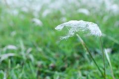 Biały kwiat w ogród zieleni tła lata plenerowym świetle słonecznym obraz royalty free