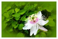 Biały kwiat w ogródzie zdjęcia royalty free