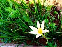 Biały kwiat w roślinie obrazy royalty free