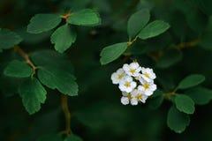 Biały kwiat w zwartym ulistnieniu Symbol nadzieja Symbol jaskrawi pomysły Obraz Stock