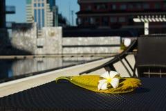 Biały kwiat z swój dużym liściem na stołowym pobliskim pływackim basenie Obrazy Stock