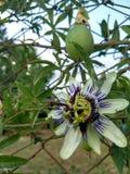 Biały kwiat znajdujący w parku obrazy royalty free