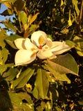 Biały kwiat znajdujący w parku zdjęcia stock