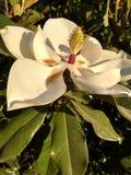Biały kwiat znajdujący w parku fotografia stock