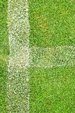 Biały lampas na zielonej trawie Fotografia Stock