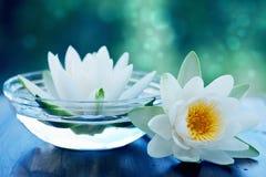 Biały lotosowy kwiat Zdjęcie Stock