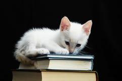 Biały Młody dziecko kot Fotografia Stock