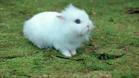 Biały Mały królik na Zielonym mech zdjęcie wideo