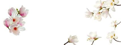 Biały magnoliowy kwiatu bukiet na białym tle zdjęcia stock