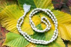 Biały mala różaniec na jesień liściach fotografia royalty free