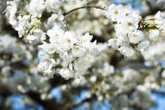 Biały niebieskie niebo w wiośnie i Fotografia Royalty Free