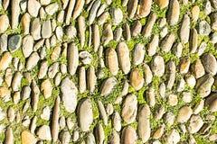biały odosobneni trawa kamienie Tło Zdjęcie Stock