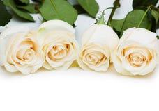biały odosobnione czerwone róże Obrazy Royalty Free