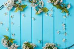 Biały okwitnięcie kwitnie na błękitnych drewnianych tło Zdjęcia Royalty Free