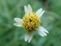 Biały płatka kwiat makro- Zdjęcie Stock