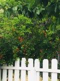 Biały palika ogrodzenie 002 zdjęcia royalty free