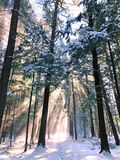 Biały pamiątkowy konserwacja terenu las zdjęcia stock