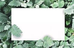 Biały papier na zielonym liścia tle z centrum bezpłatną przestrzenią dla montażu produktu lub teksta Fotografia Stock