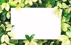 Biały papier na zielonym liścia tle z centrum bezpłatną przestrzenią dla montażu produktu lub teksta Zdjęcie Stock