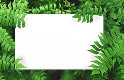 Biały papier na zielonym liścia tle z centrum bezpłatną przestrzenią dla montażu produktu lub teksta Zdjęcia Stock