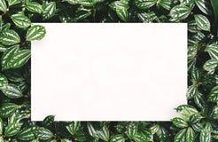 Biały papier na zielonym liścia tle z centrum bezpłatną przestrzenią dla montażu produktu lub teksta Zdjęcia Royalty Free