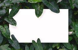 Biały papier na zielonym liścia tle z centrum bezpłatną przestrzenią dla montażu produktu lub teksta Obrazy Royalty Free