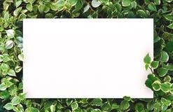 Biały papier na zielonym liścia tle z centrum bezpłatną przestrzenią dla montażu produktu lub teksta Obraz Royalty Free