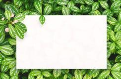 Biały papier na zielonym liścia tle z centrum bezpłatną przestrzenią dla montażu produktu lub teksta Zdjęcie Royalty Free