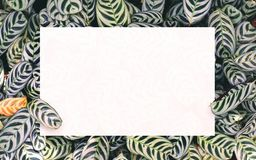 Biały papier na zielonym liścia tle z centrum bezpłatną przestrzenią dla montażu produktu lub teksta Obrazy Stock