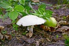 Biały perkoz wśród liści w parku Obraz Stock