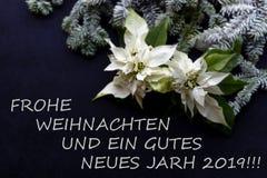 Biały poinsecja kwiat z jedlinowym drzewem i śnieg na darkbackground Powitanie kartka bożonarodzeniowa pocztówka christmastime Cz obraz stock